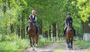 Horse helmet-no-helmet 300 wide